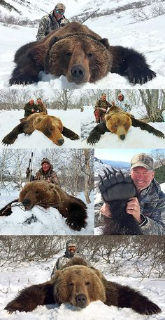 Bear Hunting, Hunting Tips, Hunting Season, Brown Bear, Weather Conditions, Fall 2016, Hunters, Harvest, Russia