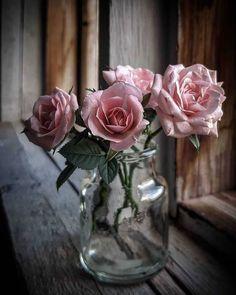 Image in flowers 🌹🌺 collection by princess Rose Beautiful Roses, Pink Flowers, Beautiful Flowers, Pink Petals, Deco Floral, Arte Floral, Flower Vases, Flower Art, Rose Flower Wallpaper