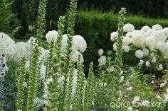 Jak zamienić glinę w wymarzony skrawek Ziemi. - strona 483 - Forum ogrodnicze - Ogrodowisko
