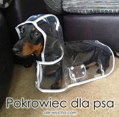 Funny Pictures, Dogs, Animals, Funny Pics, Animales, Animaux, Pet Dogs, Fanny Pics, Doggies
