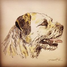 kingbee ~ border terrier