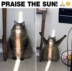 Me when the sun comes out | Very Funny Pics