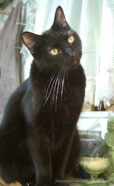 The Creative Cat - It's Friday the 13th—Adopt a Black Cat!