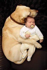 ☺ pure love a dog and it's baby