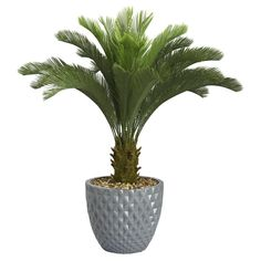 Laura Ashley Home Tall Cycas Palm Floor Tree in Planter & Reviews | Wayfair