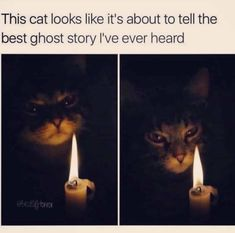 Best Day Of The Week Is Back With 39 Purr-fect Caturday Memes - World's largest collection of cat memes and other animals Animal Memes, Funny Animals, Cute Animals, Funny Cute, Hilarious, Best Ghost Stories, Spooky Stories, Stupid Funny Memes, Funny Humor