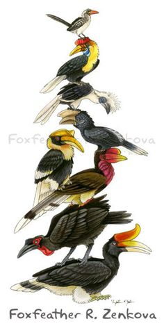 Stack of hornbills! This entire family of birds is absolutely awesome. Bird Illustration, Illustrations, Painting Prints, Wall Art Prints, Funny Parrots, Chicken Painting, Crazy Bird, Reptiles, Wildlife Art