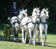 Walnut Hill Driving Competition, 2011 by Bethlc, via Flickr