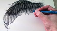 How to Draw a Wing -- so much detail. Thinking about drawing more eagles again