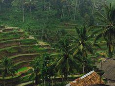 Rains in Ubud, Bali
