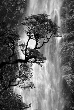 Devil's Punchbowl Falls A portion of the Devil's Punchbowl Falls in Arthur's Pass, NZ. The falls are pretty impressive - 131m high (430ft). The tree is a mountain southern beech.