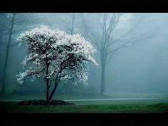 Entendre la forêt qui pousse  ~ Chapelier Fou