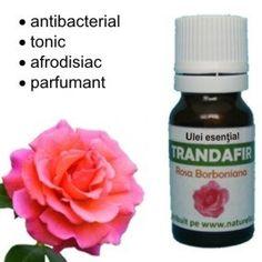 Ulei esential de Trandafir (5 ml)