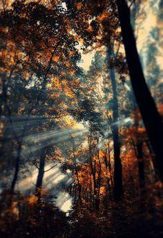 Illuminated Autumn Paths