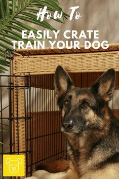 Dog Behavior Crate training your dog isn't mean and doesn't have to be hard. Click through to get 5 tips on how to humanely crate train your dog. Training Your Puppy, Dog Training Tips, Potty Training, Dog Minding, Crate Training, Dog Behavior, Crates, Puppies, Pets