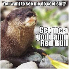 Caffeine fixes everything.  Even Otters.