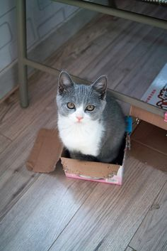 Cat in box.  Too cute!