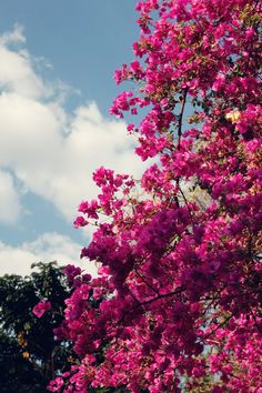 Beautiful Flowers Wallpapers, Beautiful Nature Wallpaper, Beautiful Landscapes, Aesthetic Backgrounds, Aesthetic Iphone Wallpaper, Aesthetic Wallpapers, Nature Aesthetic, Flower Aesthetic, Tumblr Photography