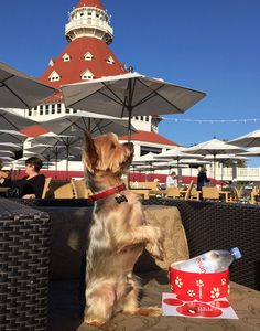 The Dog Lover's Guide to San Diego - San Diego Magazine - January 2017 - San Diego, California