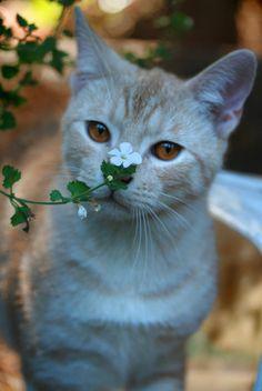 Flower #cat