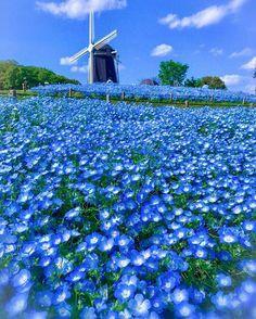 Beautiful World, Beautiful Gardens, Beautiful Flowers, Beautiful Places, Beautiful Pictures, Blue Flowers, Wild Flowers, Blossom Garden, Mont Saint Michel