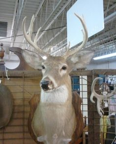 Mounted 8 Point Buck - http://get.sm/fcHzkDx #tradebank General Trading,Chattanooga TN