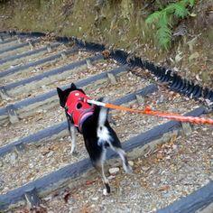 みか 裏山に登った。何年ぶりかで。早いペースのせいか、既に私が筋肉痛。遊歩道とか整備されててびっくり。今度はお弁当持って行こうか。  PetSmile