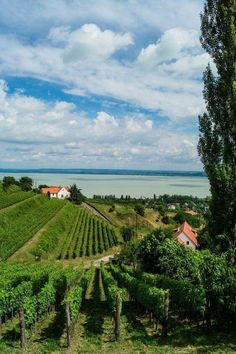 View from Badacsony, overlooking the Balaton Hungary Beautiful World, Beautiful Places, Budapest Travel Guide, Hungary Travel, Budapest Hungary, Holiday Destinations, Landscape Photos, Countryside, Places To Visit