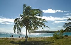 beach on vieques, Puerto Rico Porto Rico, Top Place, Dream Vacations, Travel Destinations, Tourism, Places To Visit, United States, Popular, American