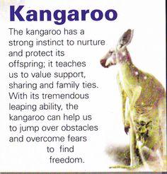 Kangaroo spiritual guide @michaelsusanno @emmammerrick @emmasusanno  #TwinFlamesTravelingtheUniverse