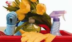 Watermelon, Fruit, Bottle, Tips, Food, Home Decor, Queen, Decoration Home, Room Decor