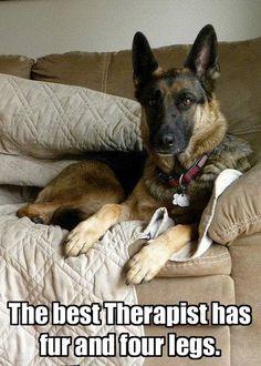 That's true! #German #Shepherd