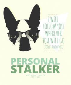 This is SO Dexter - Boston Terrier: Personal Stalker. Boston Terrier Kunst, Boston Terrier Love, Boston Terriers, Terrier Puppies, Bulldog Puppies, Dog Love, Puppy Love, Best Dogs, Mans Best Friend
