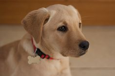 Cute puppy and dog - http://www.1pic4u.com/videos/hunde-babys/suesse-hundebabys-312/