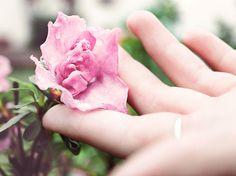 Stunning Rosenpflege Rosen schneiden