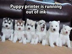 Puppy printer ink