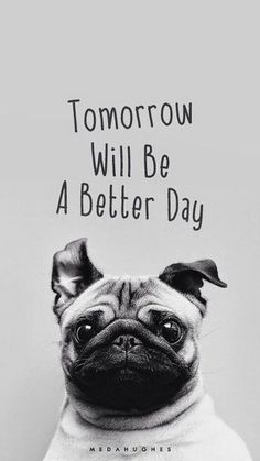 pug- tomorrow will be a better day.not my pic found it looking up pug pics… Wallpaper Pug, Wallpaper Free, Amazing Animals, Cute Animals, Emoticons, Cute Pugs, Adorable Puppies, Better Day, Tomorrow Will Be Better