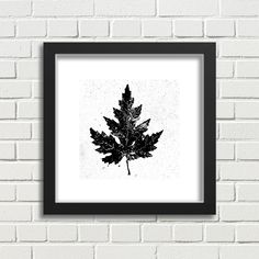 Black and White Botanical Decor Print - White Maple Leaf Square Print in a Black Wood Frame with White Border by PlatypusMaxPrints on Etsy Botanical Decor, Botanical Wall Art, Black Wood, Minimalist Design, Different Colors, Framed Prints, Leaves, Graphic Design, Black And White