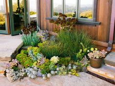 Roof runoff spills from downspouts into a shallow depression planted with grasses and succulents.