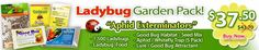 Live Ladybugs for Sale for Aphid Control