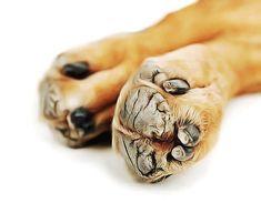 Comment soigner les coussinets fissurés du chien ? Pourquoi mon chien à les coussinets craquelés ? Remèdes naturels pour les coussinets fissurés du chien.
