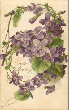 EASTER GREETINGS two open violets, one half open violet & one bud below greeting