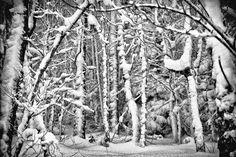 Winter by Paula Gómez del Valle on 500px
