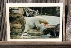 Polar Bear with Carrot Blank Note Card Animal by HBBeanstalk, $3.00