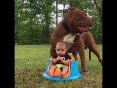 Este perro grandullón asustando al nene