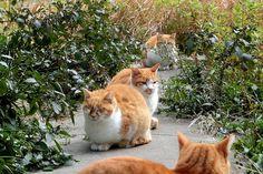 cybergata:  four cats, Abeno, Osaka by jtabn99 on Flickr. Orange Cats, Yellow Cat, Funny Animals, Cute Animals, Kitten Images, Cat Boarding, Cat Walk, Kitty Kitty, Marmalade