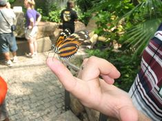 Niagara Parks Butterfly Conservatory, Niagara Falls: See 3,047 reviews, articles, and 1,084 photos of Niagara Parks Butterfly Conservatory, ranked No.2 on TripAdvisor among 201 attractions in Niagara Falls.