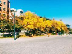 dersawi: #universityofcincinnati #autumn #VSCOcam