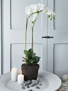 Large Faux Orchid - Nordic House