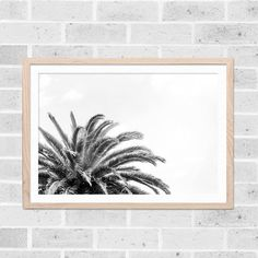 black and white beach photography palm tree by mylittlepixels